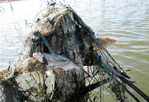 все о рыбалке сетями браконьеры